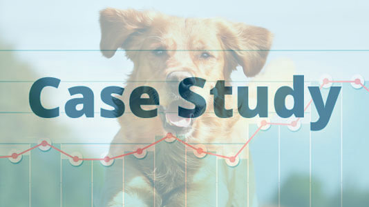 Dogs Daycare in Fort Worth, TX – 217% Organic Traffic Increase Image